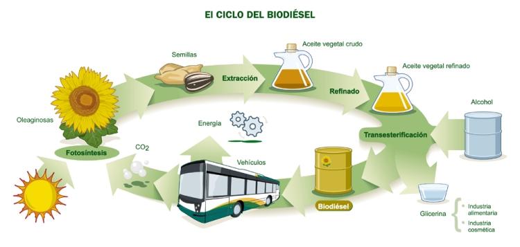 Ciclo biodiesel